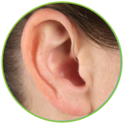 mar-ear-in-circle-green-small-2